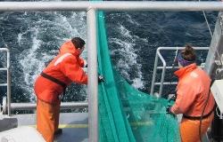 pescadores_small